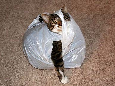 bag-of-cats-2.jpg